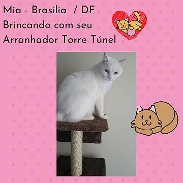Mia_Brasilia_DF