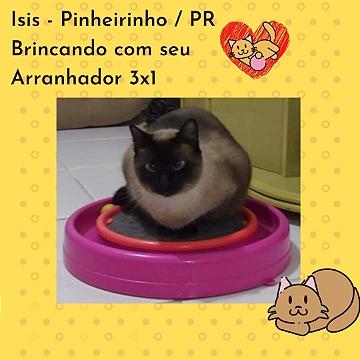 isis_parana