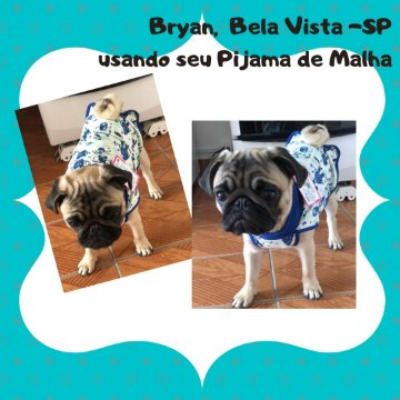 Bryan_Bela Vista/SP_pijama_pet