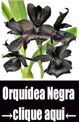 negra natural
