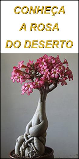 Conheça a Rosa do Deserto