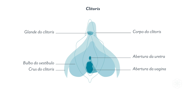 mapa do clitóris