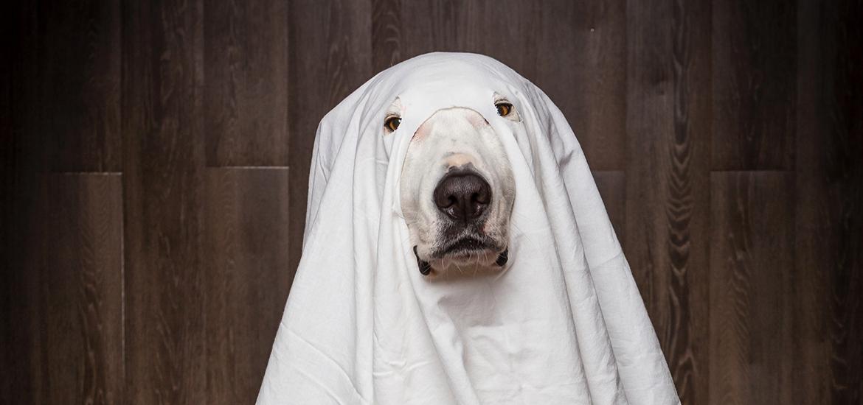 cachorro fantasma