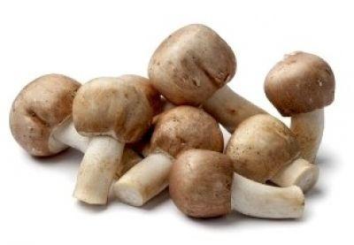 cogumelo-agaricus-blazei-murril