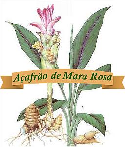 Açafrão de Mara Rosa