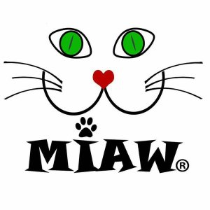 0bd3a73193 Almofada Mingau - Miaw
