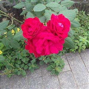 Rose Festas Eventos