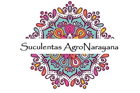 Suculentas - Agro Narayana