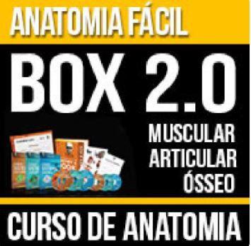 CURSO DE ANATOMIA BOX 2.0