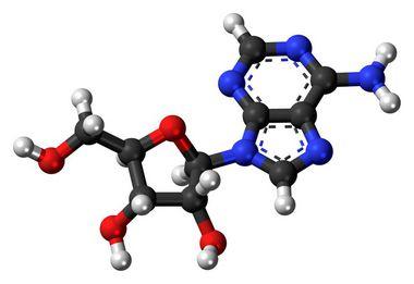 [58-61-7]Adenosine1GR