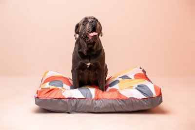 Almofada para Cachorro Mabuu Pet - Arte Moderna