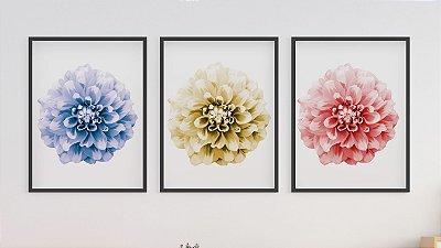 Kit 3 Quadros Colorful Dahlia Flower