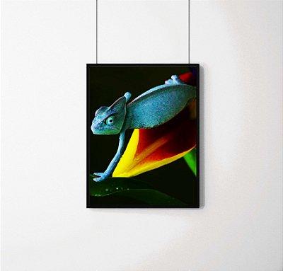 Quadro Decorativo Animais- Camaleão
