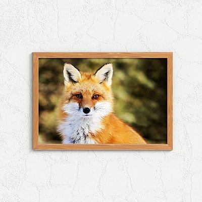 Quadro Decorativo Animais- Raposa da floresta.