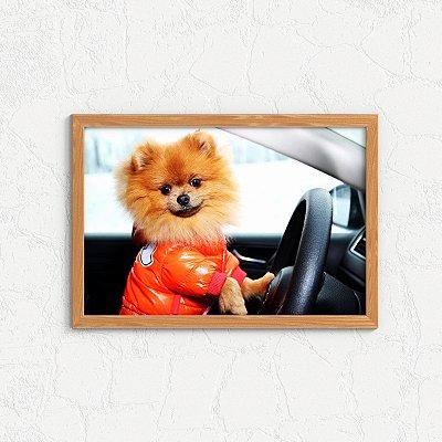 Quadro Decorativo Animais- Funny Zwergspitz Driving.
