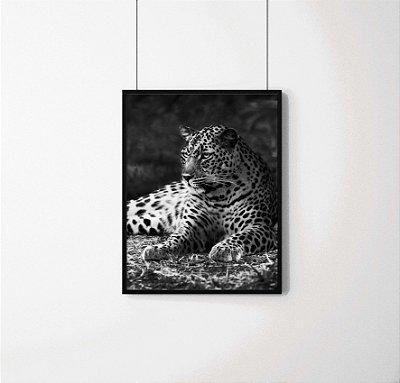 Quadro Decorativo Animais- Onça Pintada.