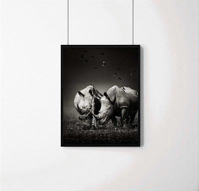 Quadro Decorativo Animais- Rinocerontes em preto e branco.