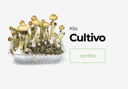 kit cultivo cogumelos