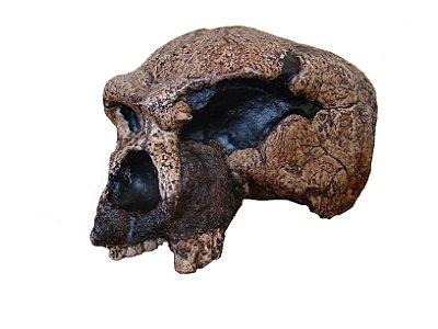 crânio de Homo heidelbergensis
