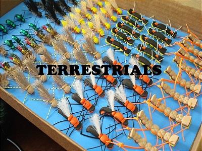 TERRESTRIALS 1