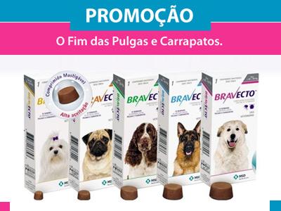 Bravecto - Pulgas