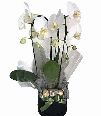 Orquídea Box Cascata