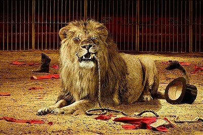 Quadro Leão - Circo