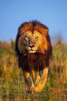 Quadro Leão de Judá 3