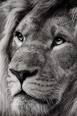 Quadro Leão de Judá - Preto e Branco 2