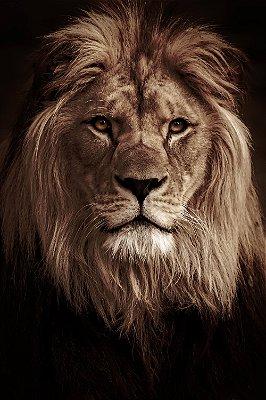 Quadro Leão de Judá 4