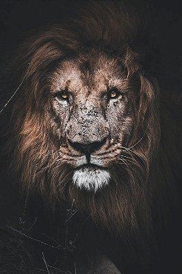 Quadro Leão de Judá 5