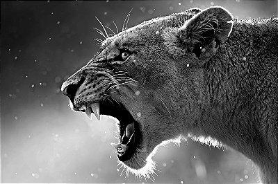 Quadro Animais - Puma Preto e Branco