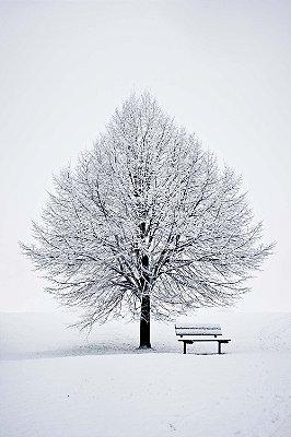 Quadro Paisagem - Árvore de Inverno