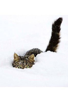 Quadro Animais - Gato na Neve