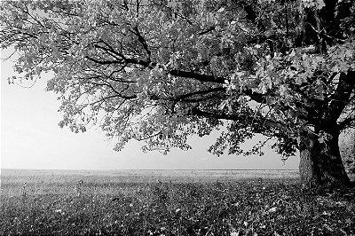 Quadro Paisagem - Árvore Planície Preto e Branco
