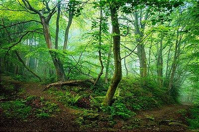 Quadro Paisagem - Floresta