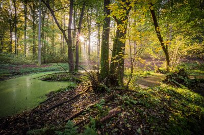 Quadro Paisagem - Floresta Natural