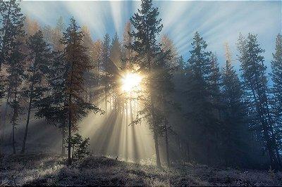 Quadro Paisagem - Amanhecer na Floresta