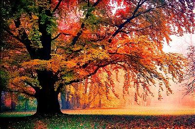 Quadro Paisagem - Árvore Colorida