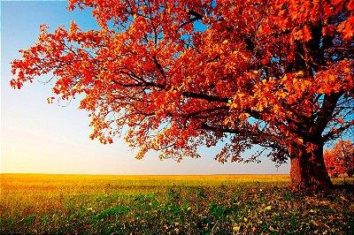 Quadro Paisagem - Árvore Planície