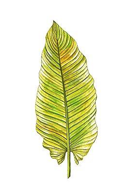Quadro Minimalista - Folha Verde
