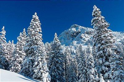 Quadro Paisagem - Inverno do Alaska