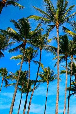 Quadro Praia - Coqueiros 2