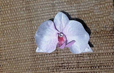 Orquídea branca com rosa