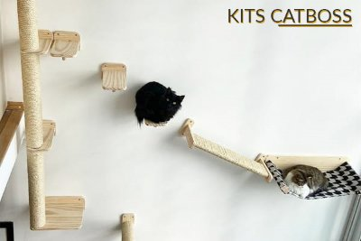 kit catboss