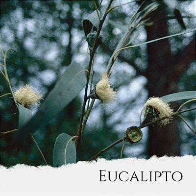 Óleo Essencial de Eucalipto Globulus