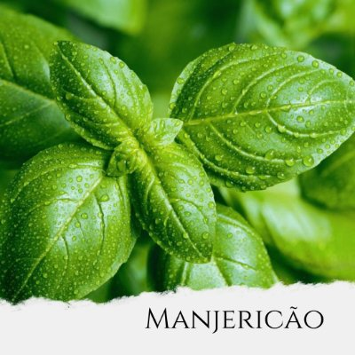 Óleo Essencial de Manjericão qt. Metilchavicol