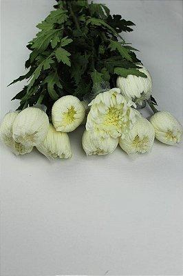 Anastácia Branca - maço com 10 hastes