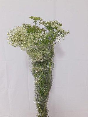 Flor de Cenoura