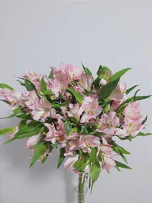 Alstromélia Rosa